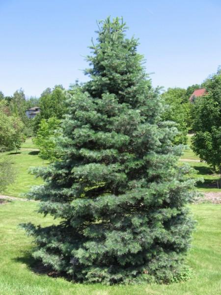 luigi zanon principali essenze o legni lavorati nell